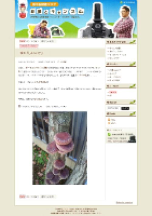 sasagwa_blog